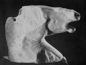 A fragmentary head of a horse in Greek marble