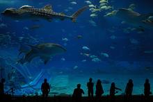 Okinawa Churaumi Public Aquarium